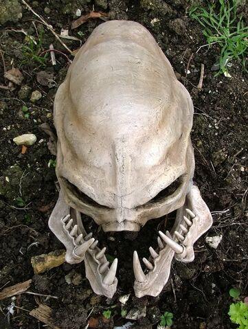 File:USER Dabomb 217 skull1.jpg