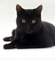File:Black cat.png