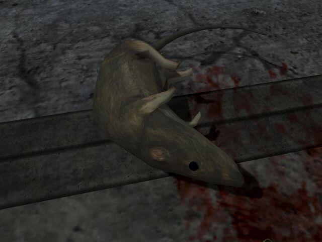 File:Dead Rat.jpg