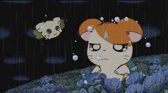 Ham Fairy & Hamtaro