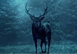 File:Stag deer.jpg