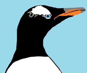 Middleton the Gentoo Penguin