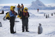 Aptenodytes forsteri -Snow Hill Island, Antarctica -juvenile with people-8