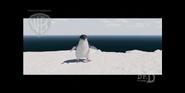 Strike - Little penguin stay