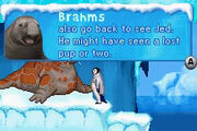 Brahms the Elephant Seal