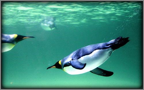 File:Underwater flight.jpg
