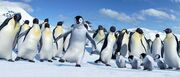 2006 happy feet 038