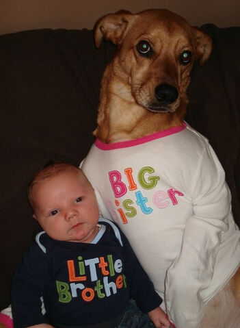 File:Xo3oo-funny-dog-baby.jpg