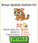 Brown Scottish Fold Cat New