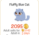 Fluffy Blue Cat