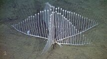 Harp-sponge