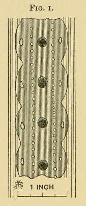 File:Fig-1.jpg