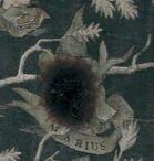 Marius Black