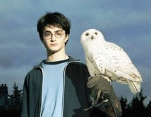 File:Harry with Hedwig.jpg