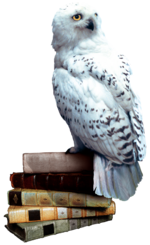 Hedwig books