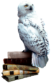 Hedwig books.png