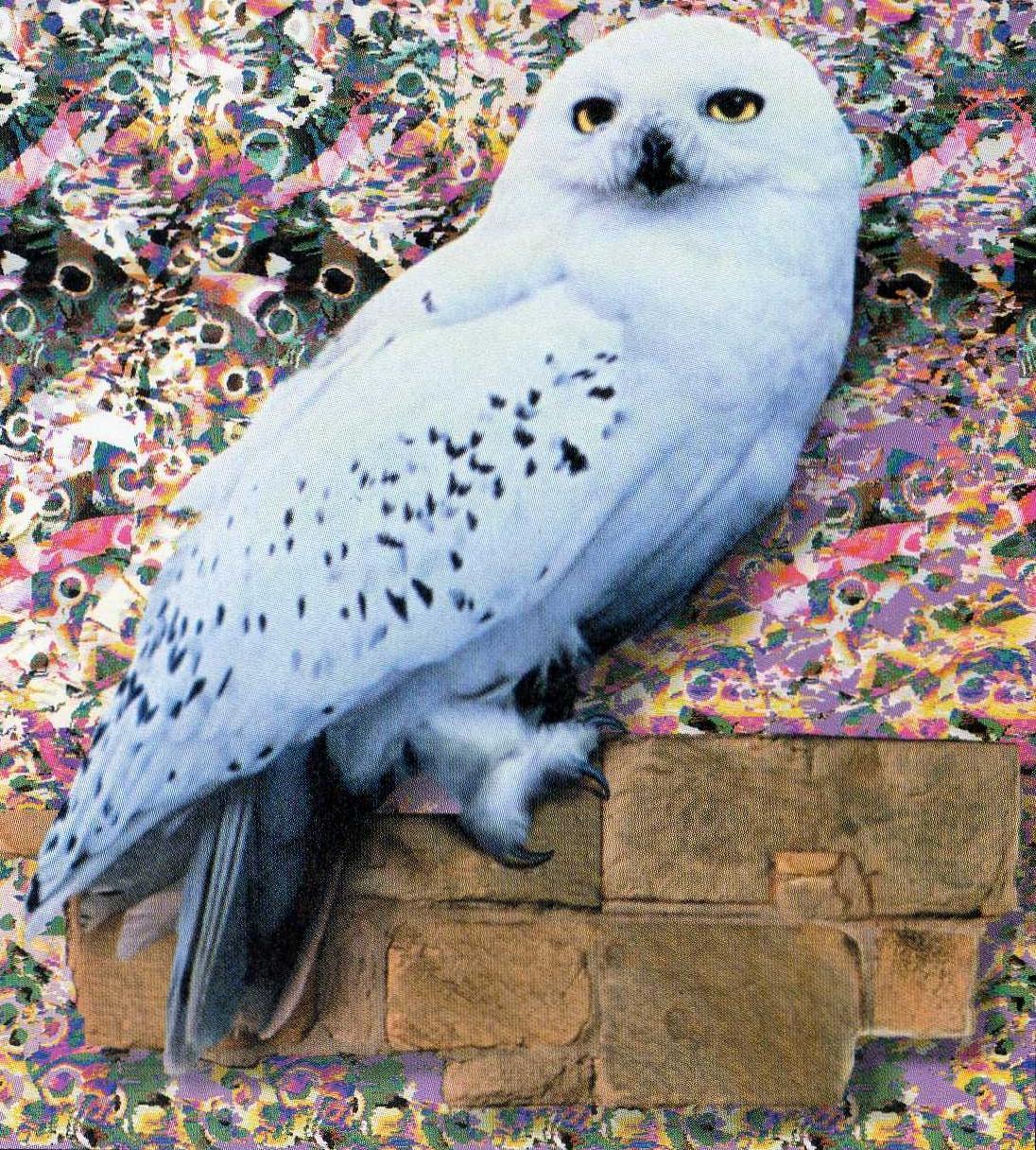 Bestand:Hedwig.jpg