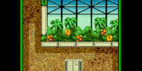 Greenhouse Two