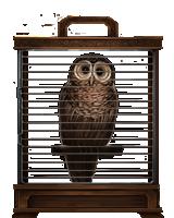 File:Brown-owl-lrg.png