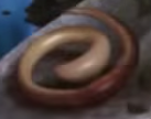 File:Worm.png