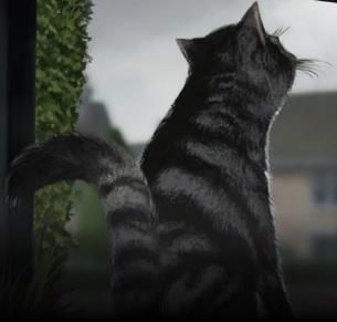 File:McG Cat Pottermore.jpg