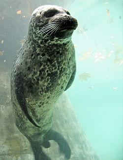 File:Seal.jpg
