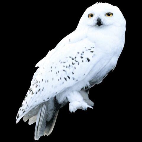 File:Hedwig WB F3 HedwigStill Promo 100615 Port.jpg