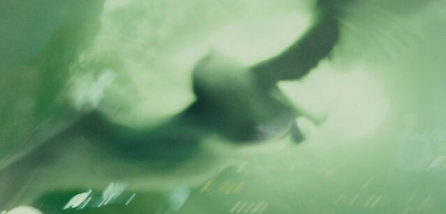 File:Hedwig dies.jpg