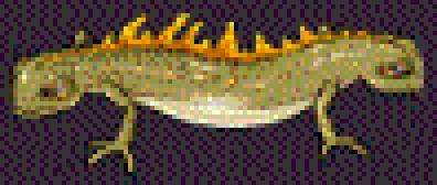 File:Double-ended Newt.jpg