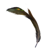 File:Peacock-quill-lrg.png