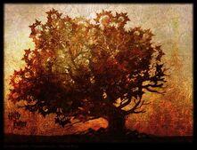 DH1 The Elder Tree