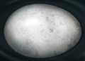 Hippogriff egg.png