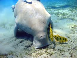 File:DUGONGS ARE HORRIBLE.jpg