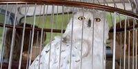 Hedwig (Admin)