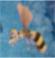 RF4 Hornet Queen