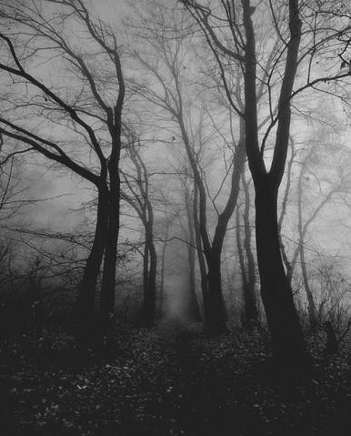 File:Creepy lost woods.jpg