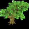 Cherry Tree Stage 1