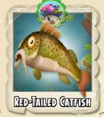 Red-Tailed Catfish Photo
