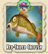 File:Red-Tailed Catfish Photo.jpg
