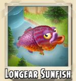 Longear Sunfish Photo