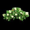 Rose Fence White