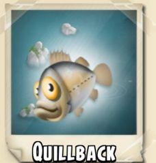 File:Quillback Photo.jpg