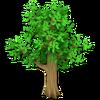 Small Leafy Tree