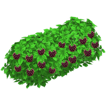 File:Blackberry Bush.png