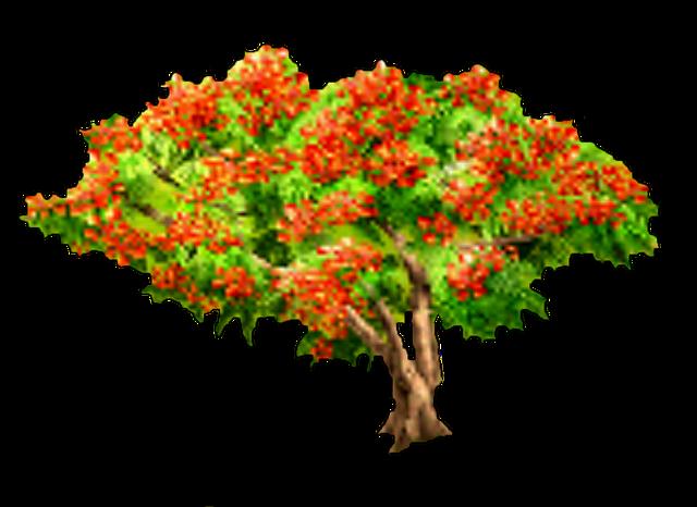 File:Royal Poinciana Tree.png