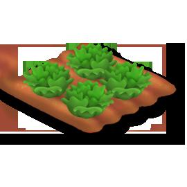 File:Lettuce Stage 4.png