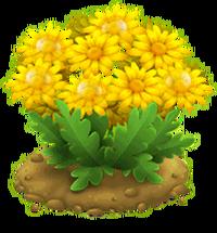 Nectar Bush