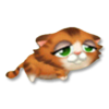 Tabby Kitten Tired