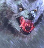 Kessler werewolf 005