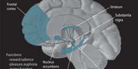 Dopaminergic pathway